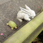 ウサギとカメの真実